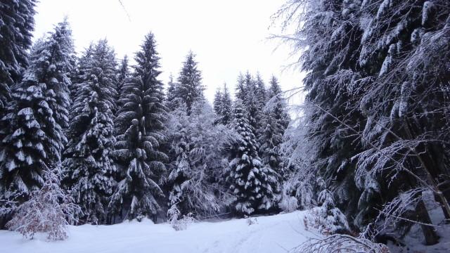 Galbinele sec iarna_blog 02