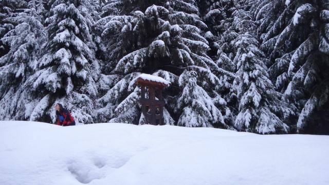 Galbinele sec iarna_blog 03