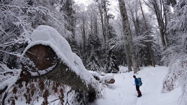 Galbinele sec iarna_blog 04