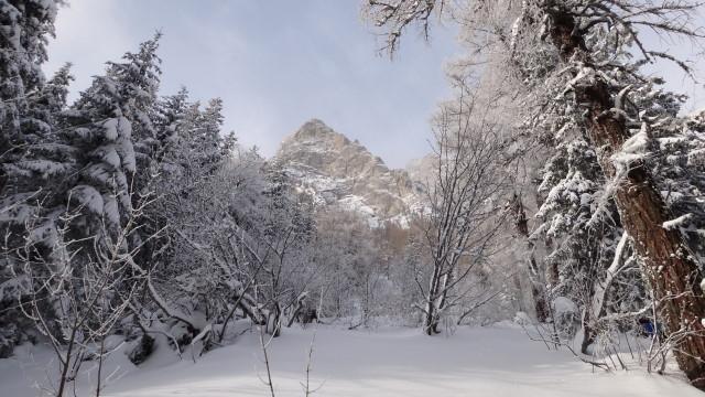 Galbinele sec iarna_blog 05