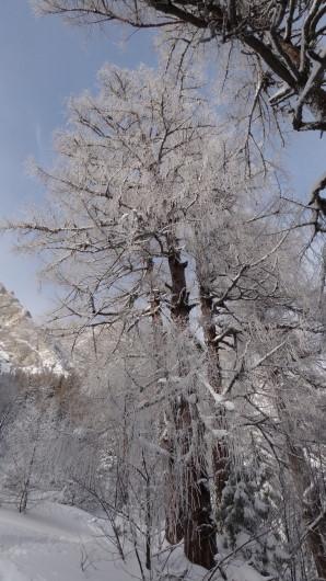 Galbinele sec iarna_blog 07