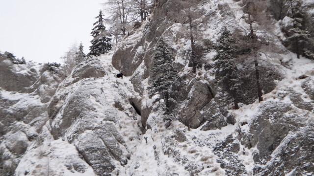 Galbinele sec iarna_blog 11