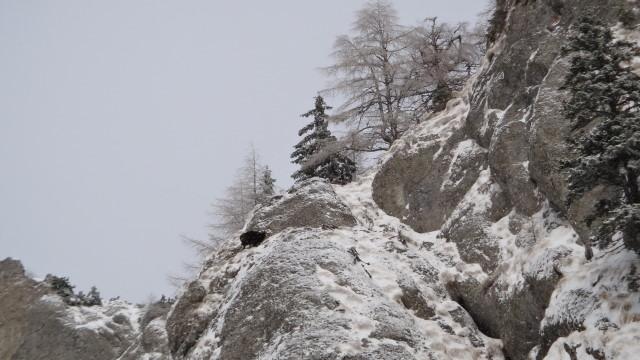 Galbinele sec iarna_blog 17