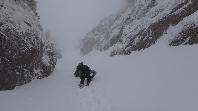 Galbinele sec iarna_blog 44