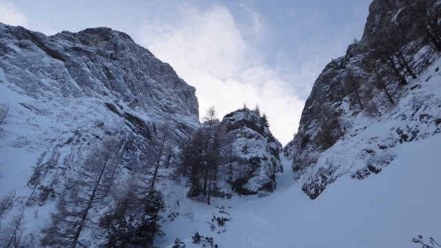 Galbinele sec iarna_blog 72