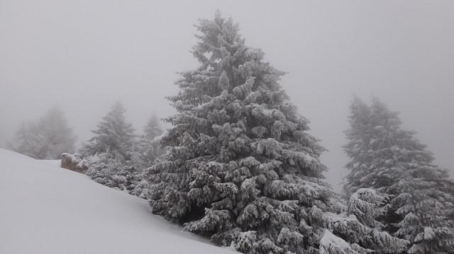 25_Cr Zaganu_Gropsoarele_iarna _blog