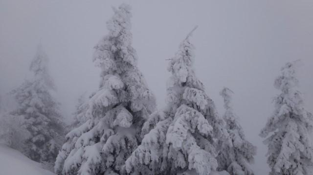 46_Cr Zaganu_Gropsoarele_iarna _blog