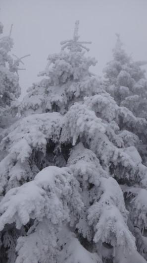 60_Cr Zaganu_Gropsoarele_iarna _blog