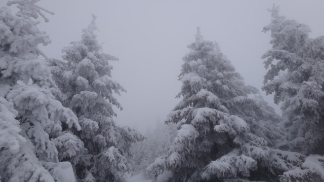 62_Cr Zaganu_Gropsoarele_iarna _blog