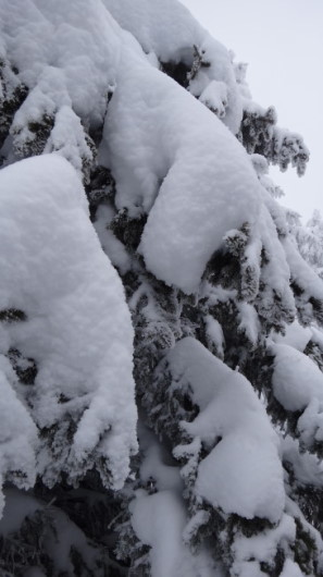 64_Cr Zaganu_Gropsoarele_iarna _blog