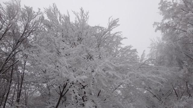 81_Cr Zaganu_Gropsoarele_iarna _blog