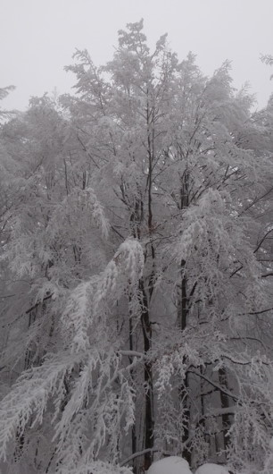 83_Cr Zaganu_Gropsoarele_iarna _blog
