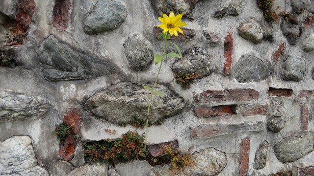 Manastirea Hurezi _blog 11