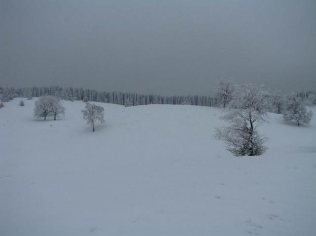 Cr Cocos_iarna _blog 25