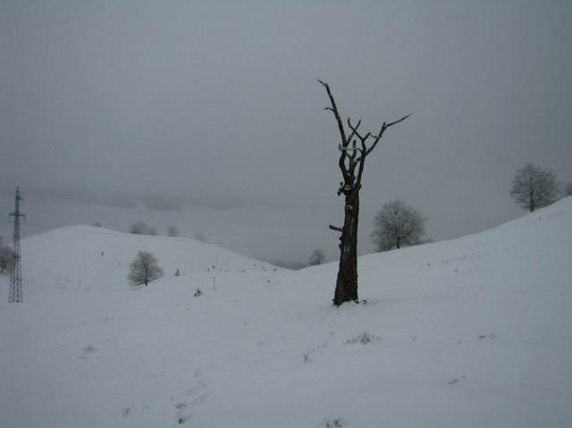 Cr Cocos_iarna _blog 86