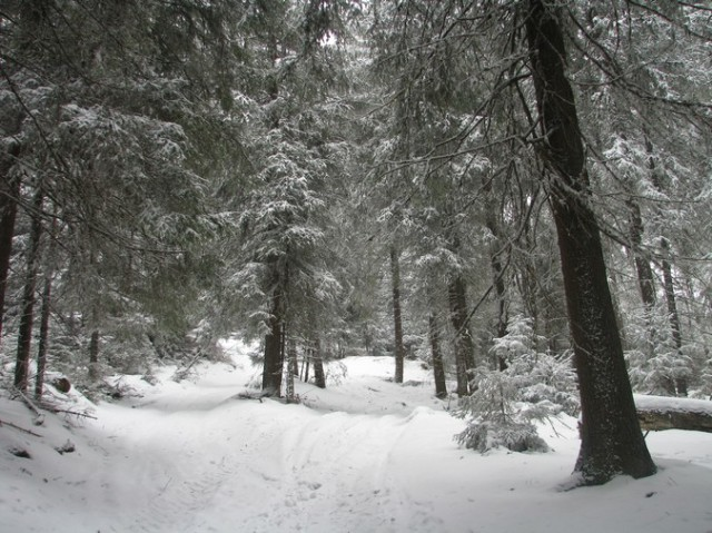 Giumalau_trav_iarna _blog 072