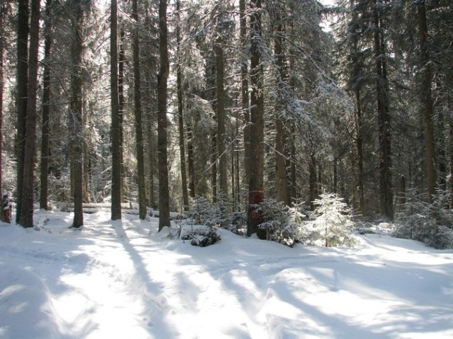 Giumalau_trav_iarna _blog 079
