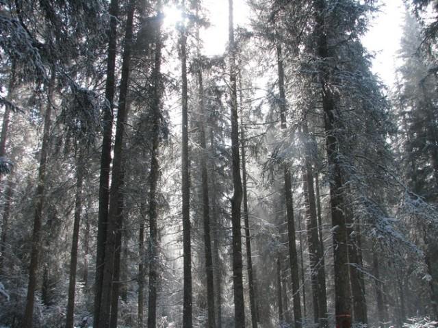 Giumalau_trav_iarna _blog 082