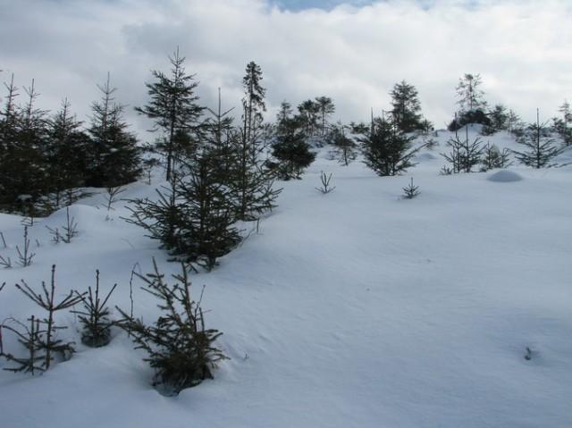 Giumalau_trav_iarna _blog 085