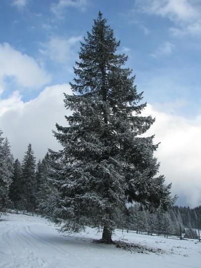Giumalau_trav_iarna _blog 092
