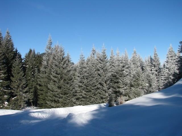 Rarau_trav_iarna _blog 90