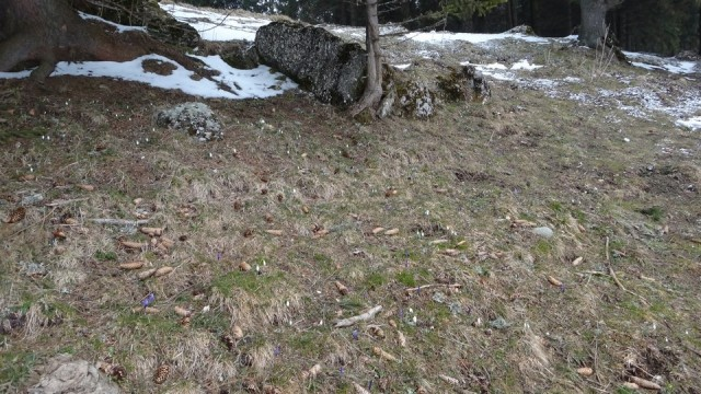 V Coltilor_iarna_14032015_blog 007