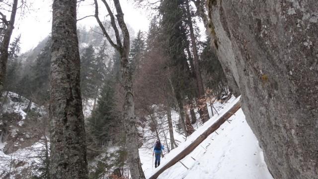 V Coltilor_iarna_14032015_blog 010