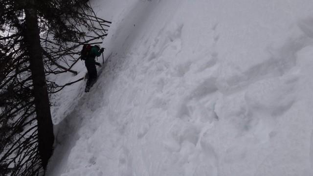 V Galbinele sec_iarna_14032015_blog 074